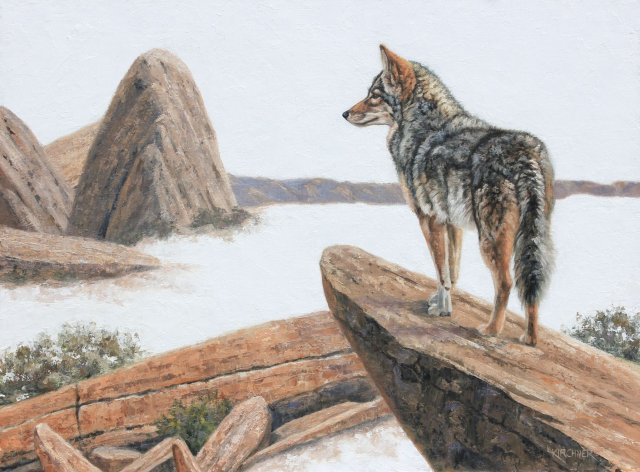 Leslie Kirchner, leslie kirchner art, leslie kirchner artist, wildlife artist, western artist, nature artist, western art, wildlife art, nature art, wild canid, wild dog, coyote, coyote painting, coyote art